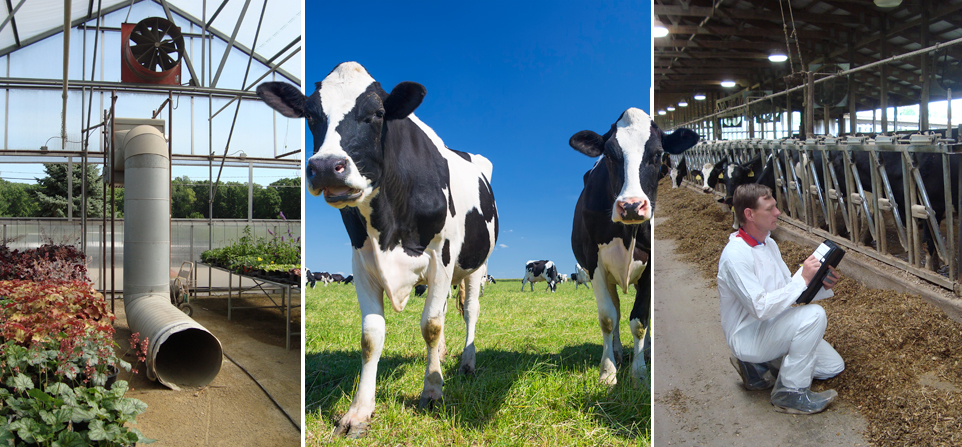 GDS Associates has performed thousands of agriculture facility energy audits nationwide and serviced all types of agriculture facilities ranging from dairies and greenhouses to aquaculture and vegetable farms.